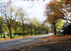 Mosspark Boulevard in the Autumn by Carys McGraw